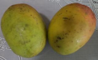 Fernandine mango